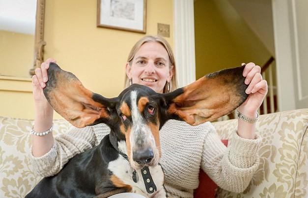 Suzi Lane com o cão Remy e suas enormes orelhas. (Foto: Reprodução / Metro UK)