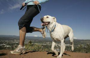 O passeio com o cachorro também traz benefícios ao tutor. (Foto: Reprodução / Google)