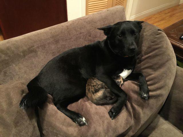 O cachorro estava protegendo o gatinho da tempestade. (Foto: Reprodução / Reddit / YungDemon)