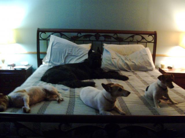cachorros-cama-cheia (1)