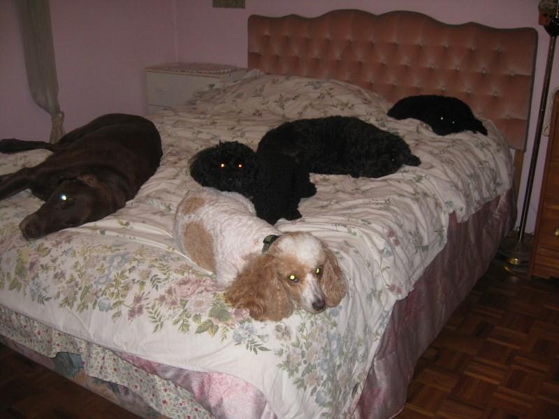 cachorros-cama-cheia (12)