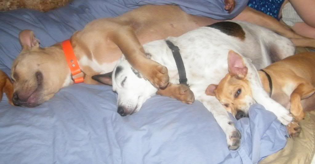 cachorros-cama-cheia (13)