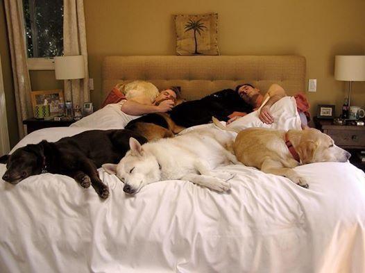 cachorros-cama-cheia (3)