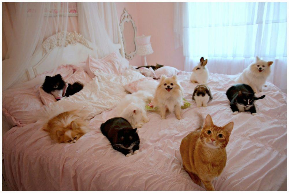 cachorros-cama-cheia (4)