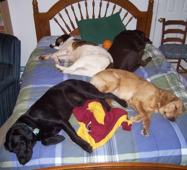 cachorros-cama-cheia (5)