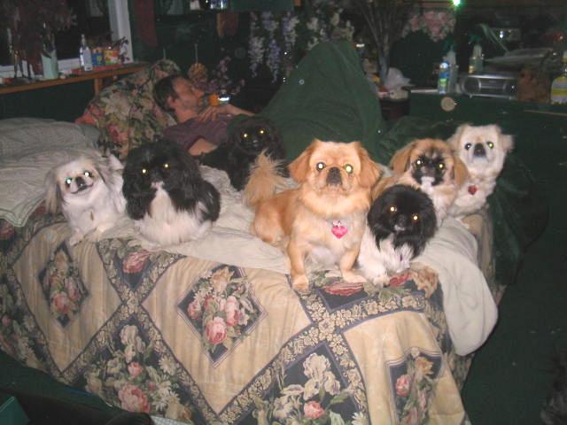 cachorros-cama-cheia (6)