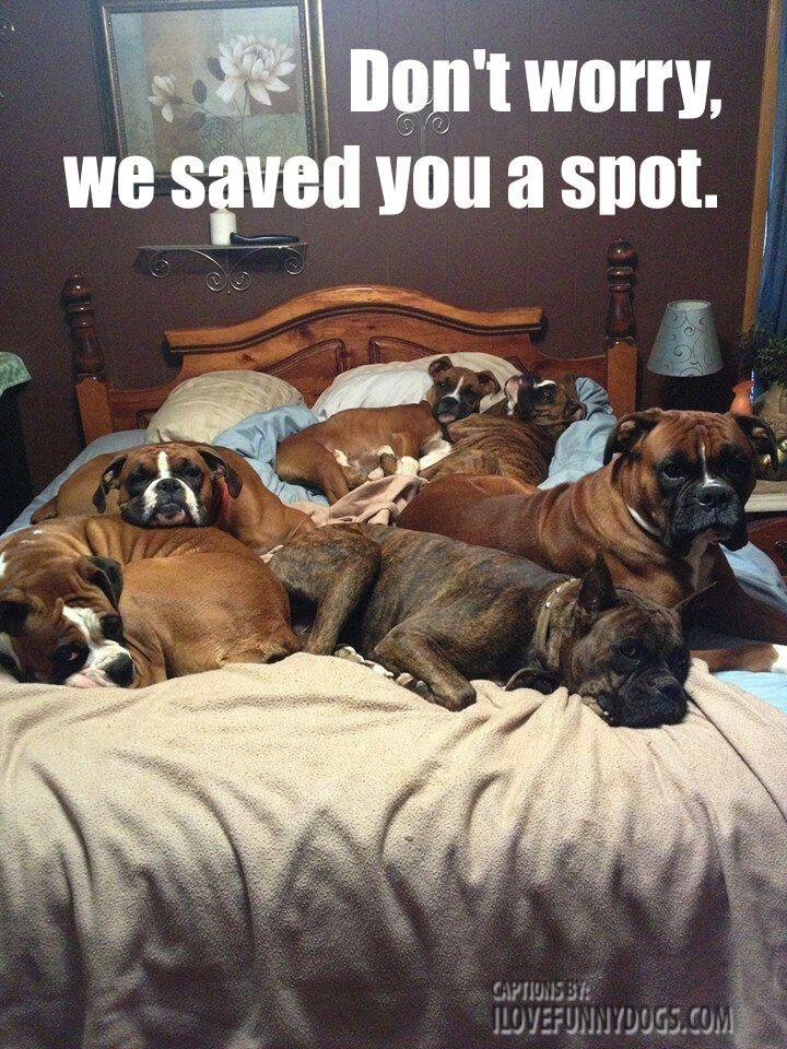 cachorros-cama-cheia (7)