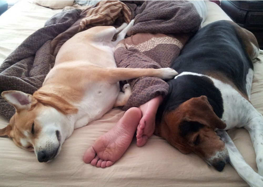 cachorros-cama-cheia (8)