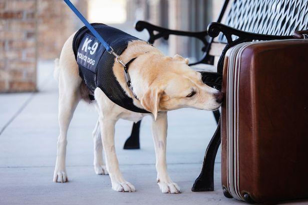 Cão farejador.  (Foto: Reprodução / Metro UK)