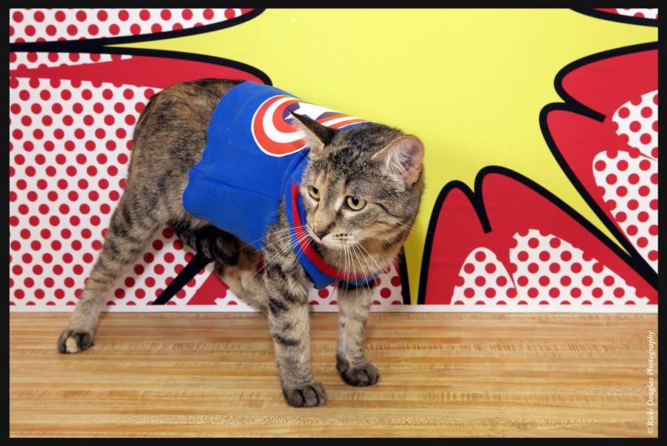 comic-con-gato-