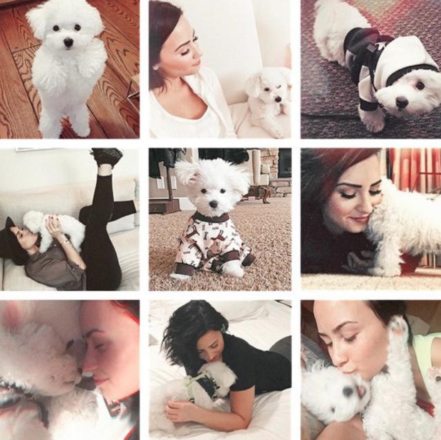 Demi Lovato publicou essa montagem em homenagem ao Buddy. (Foto: Reprodução / Instagram)