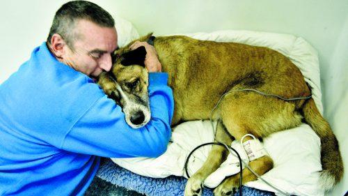 Mark Woodbury salvou a vida de seu cachorro Ditch. (Foto: Reprodução / The Dodo)