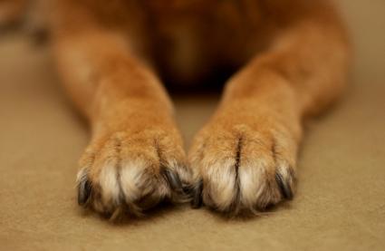 O cheirinho da pata dos cães te agrada?  (Foto: Reprodução / Google)