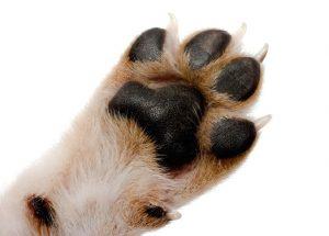 Os cachorros também têm chulé! (Foto: Reprodução / Google)