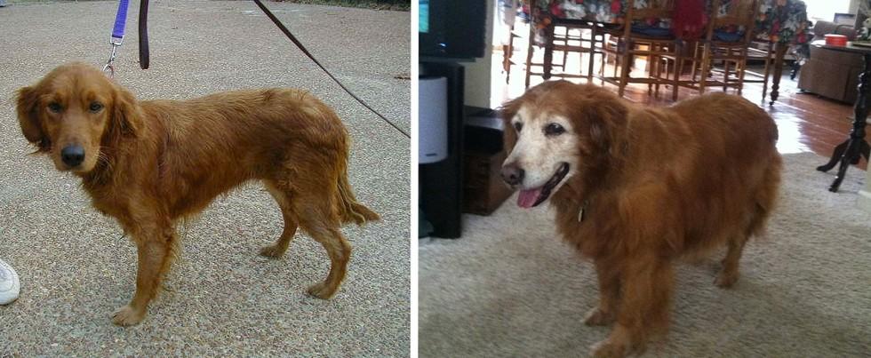 """""""Minha cachorra faleceu ontem, essa é a primeira e a última foto dela..."""" (Foto: Reprodução / The Dodo)"""