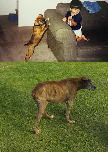"""""""13 anos atrás quando eu conheci meu cachorro, (e) aqui ele está no parque. Nós o levamos pela última vez e deixamos que ele andasse por onde quisesse."""" (Foto: Reprodução / The Dodo)"""