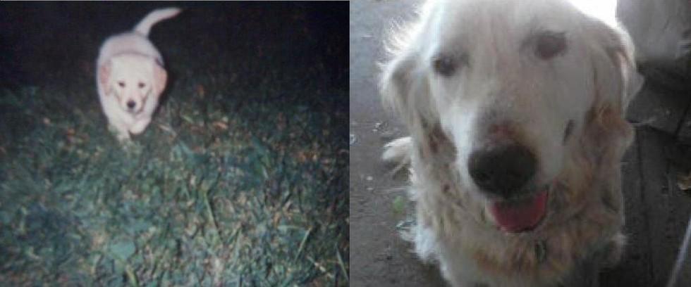 """""""Ela foi minha amiga durante 16 anos, e hoje, infelizmente ela faleceu por causa de um derrame. Eu amo essa cachorra, e eu sinto muita falta dela."""" (Foto: Reprodução / The Dodo)"""