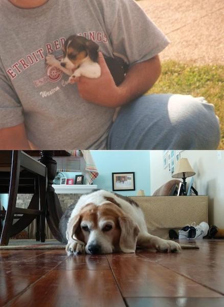 """""""A primeira e a última foto do meu melhor amigo."""" (Foto: Reprodução / The Dodo)"""