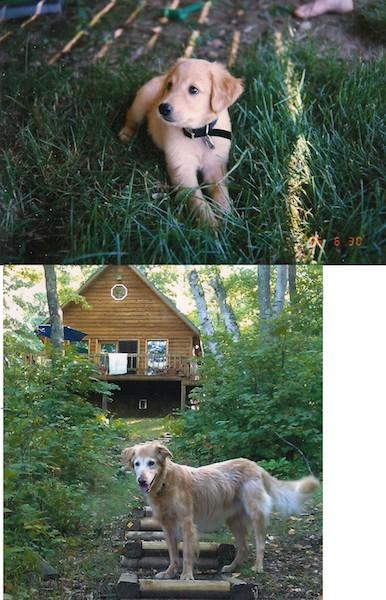 """""""Aqui está a primeira e a última foto que tiramos do nosso cachorro, 16 anos."""" (Foto: Reprodução / The Dodo)"""