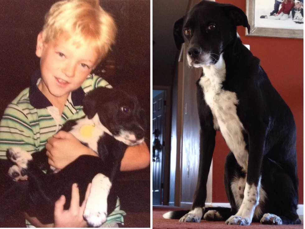 """""""Do primeiro 'Oi' ao último 'Adeus'. O melhor cachorro que eu já tive."""" (Foto: Reprodução / The Dodo)"""