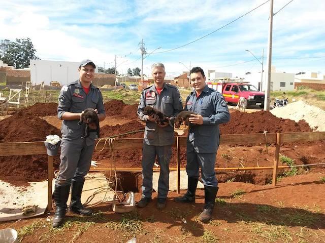 Os bombeiros conseguiram resgatar os três filhotes. (Foto: Reprodução / Facebook / Corpo de Bombeiros - Patos de Minas)