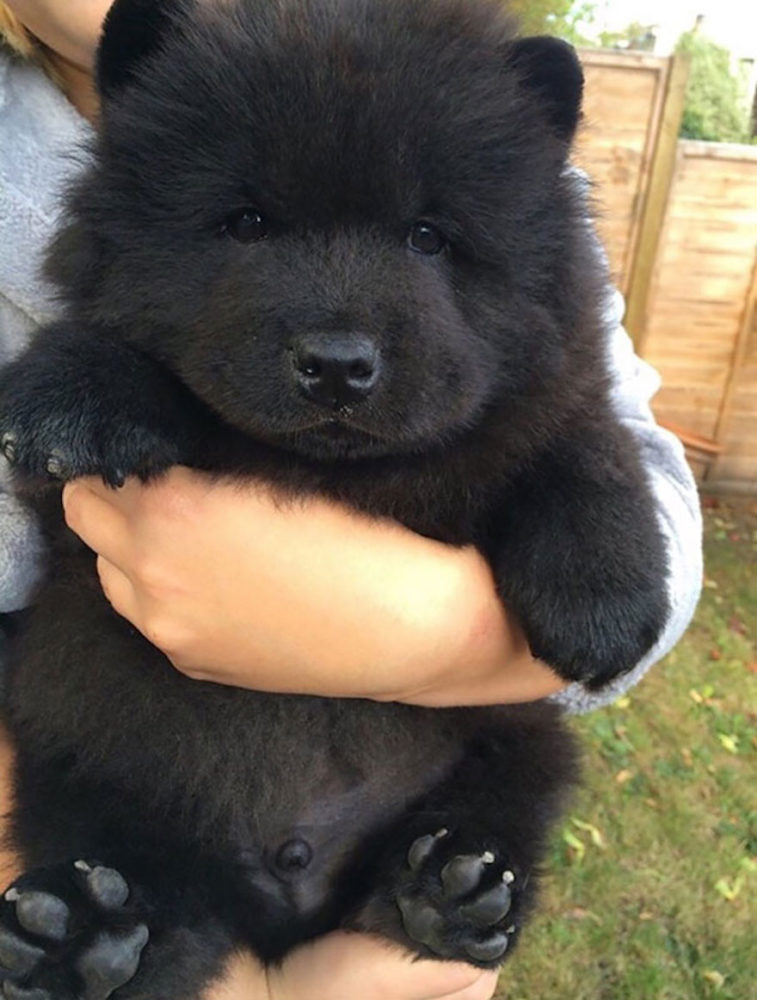 ursos-cachorros-01