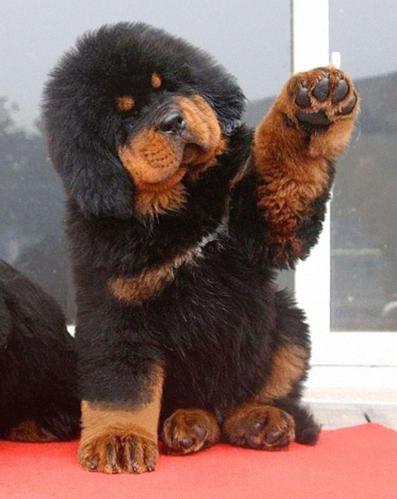 ursos-cachorros-05