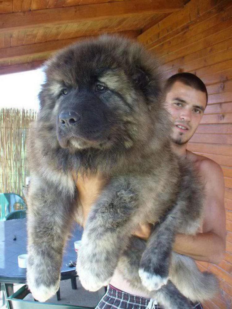 ursos-cachorros-06