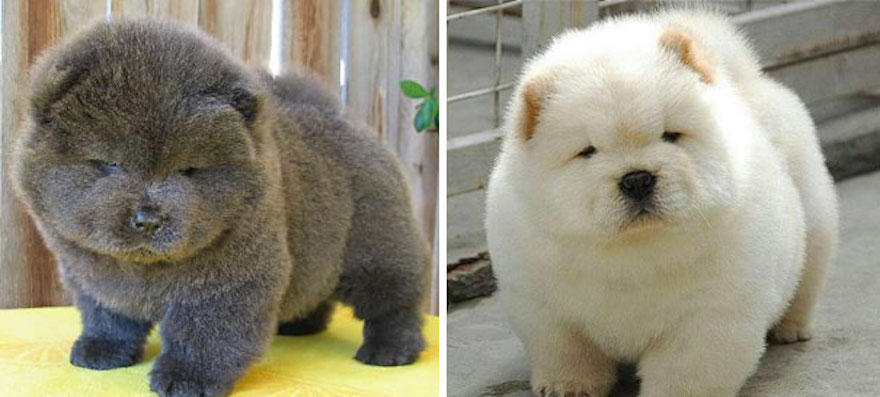 ursos-cachorros-07