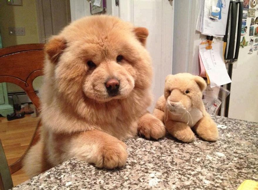 ursos-cachorros-09