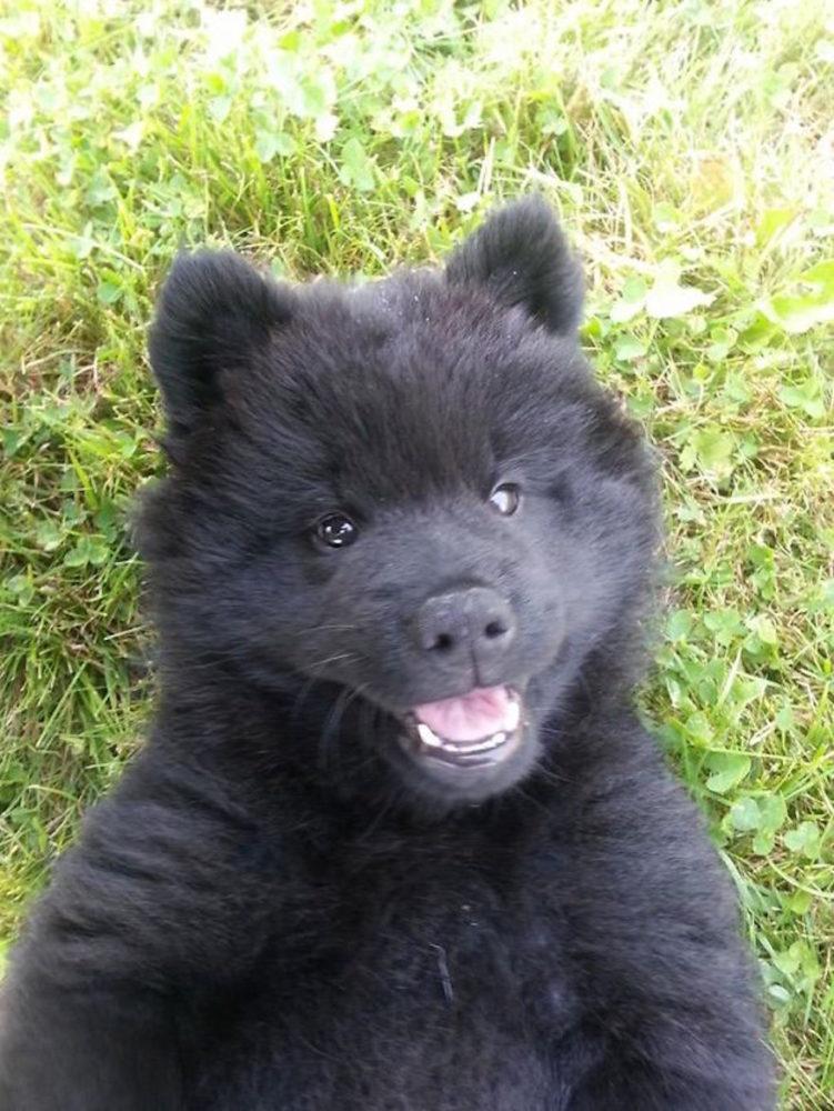 ursos-cachorros-10