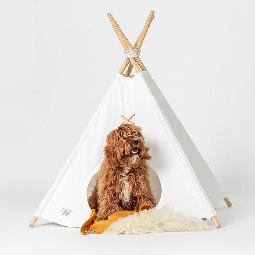 Barraca de acampamento para cachorro. (Foto: Reprodução / Camp Cloon)