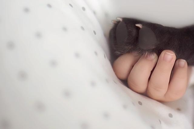 Carinho e companheirismo. (Foto: Reprodução / Bored Panda)