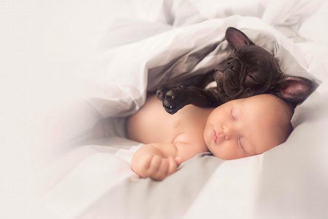 Nada melhor do que dormir juntinhos, não é? (Foto: Reprodução / Bored Panda)