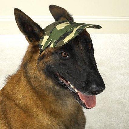 Boné para cachorros. (Foto: Reprodução / Amazon)