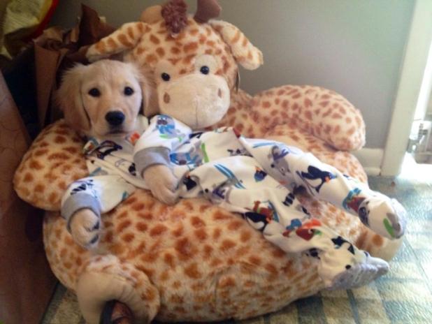 Cachorros são como filhos. (Foto: Reprodução / Bark Post)