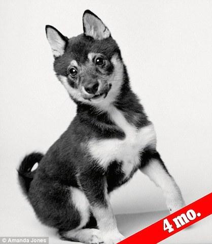 Pam Treece acredita que sua cachorra Abigale adora as pessoas. Aqui tinha apenas 4 meses.  (Foto: Reprodução / Daily Mail UK)