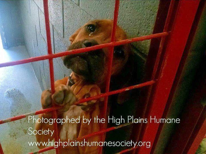 A cachorra e suas lágrimas deixaram muitas pessoas comovidas. (Foto: Reprodução / Facebook / High Paws Humane SOciety)