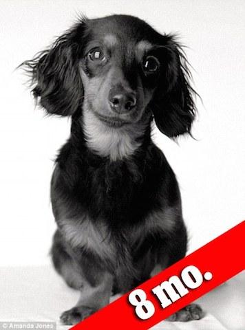 A cachorra Lily inspirou a fotógrafa Amanda Jones a criar o projeto. Nesta foto ela tinha apenas 8 meses de vida. (Foto: Reprodução / Daily Mail UK)