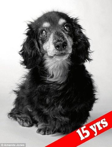 A dachshund já idosa aos 15 anos de idade.  (Foto: Reprodução / Daily Mail UK)