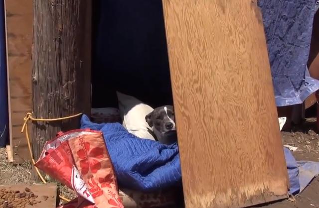 A cachorra estava em uma caminha improvisada em uma área industrial. (Foto: Reprodução / Youtube / Hope for Paws)