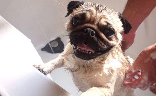 Alegria pós-banho. (Foto: Reprodução / Bark Post)