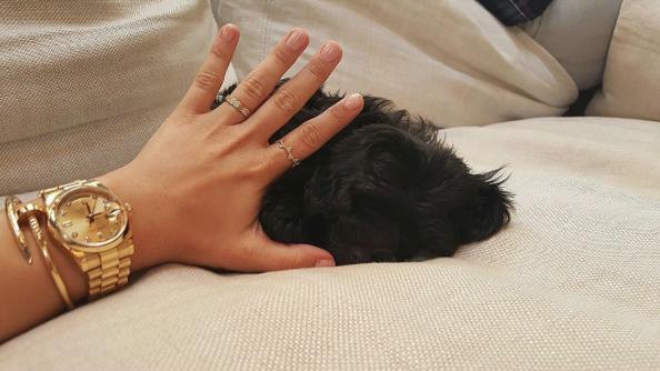 Cachorro Batman de Demi Lovato. (Foto: Reprodução / Instagram)