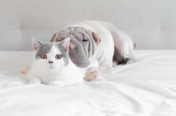 O melhor amigo também serve como travesseiro. (Foto: Reprodução / Instagram)