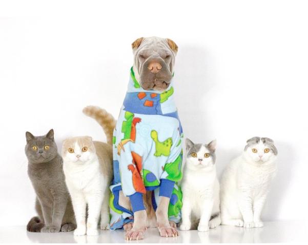 O cão Paddington e os felinos Sailor, London, Butler e Percy. (Foto: Reprodução / Instagram)