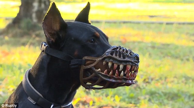 Black Dog Tactical