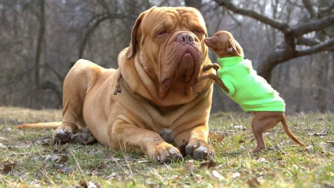 Temos que aproveitar cada segundo ao lado dos nossos cachorros, independente do tamanho! (Foto: Reprodução / Bark Post)