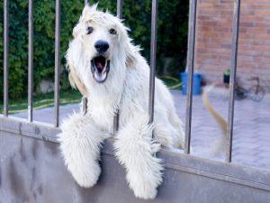Não deixe que o latido do seu cão seja motivo de briga com os vizinhos. (Foto: Reprodução / Google)