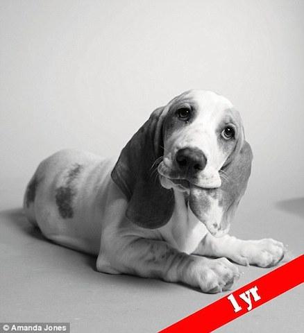 Poppy com 1 ano de vida. (Foto: Reprodução / Daily Mail UK)