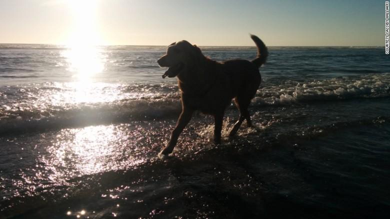 cachorro-praia-viagem-cancer-02